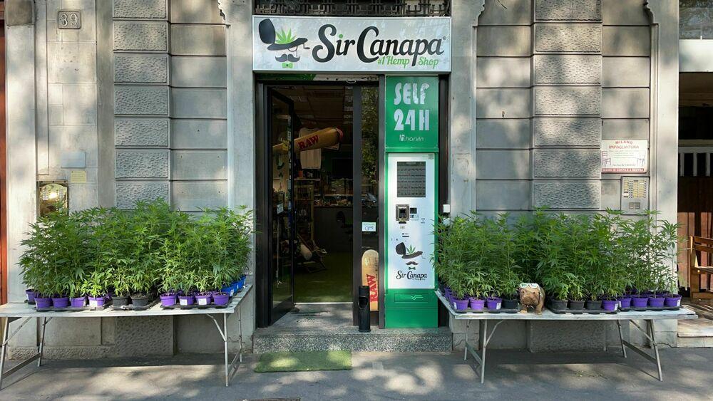 """A Milano c'è un """"Cannabivendolo"""" che oggi, """"4.20"""", regala le piante di cannabis a tutti"""