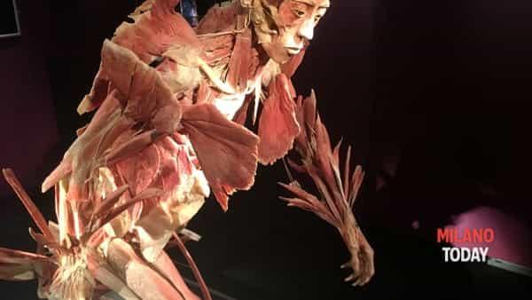 Ecco real Bodies la mostra di cadaveri e organi umani | Informazioni e orari