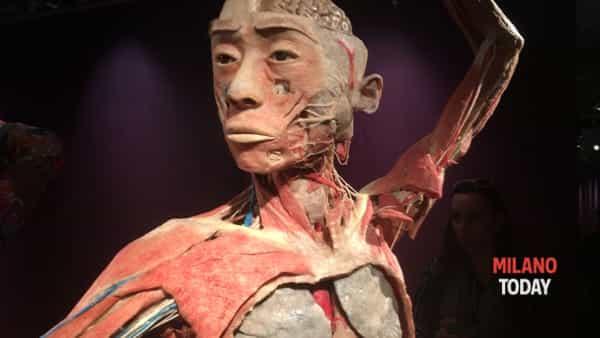 Prorogata al 19 marzo Real Bodies, la mostra di cadaveri e organi umani | Info e orari