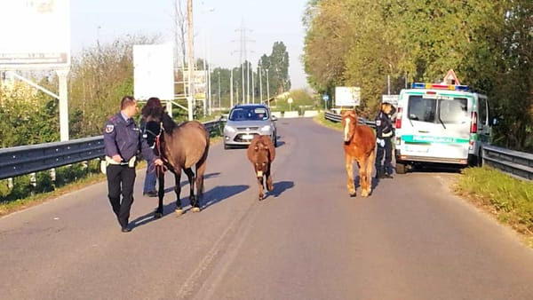 Foto polizia locale Melzo