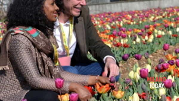 tulipani italiani edizione 2018-3