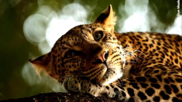 Torna Wildlife Photographer of the Year: alla Fondazione Matalon gli scatti più belli della natura
