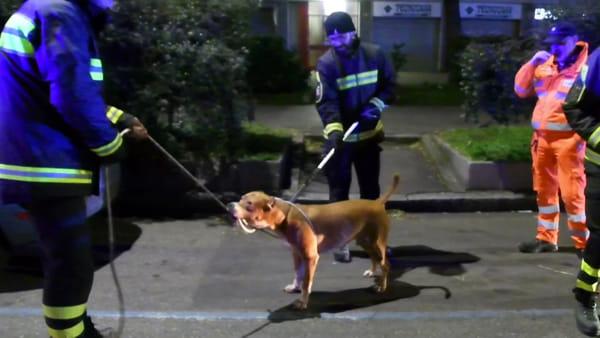 Cane aggredisce il suo padrone e due passanti: bloccato dai vigili del fuoco