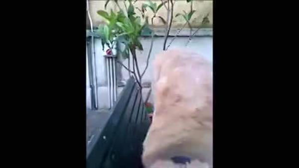 Morto Ruben, il cagnolone vigile del fuoco: il toccante video ricordo dei suoi amici pompieri
