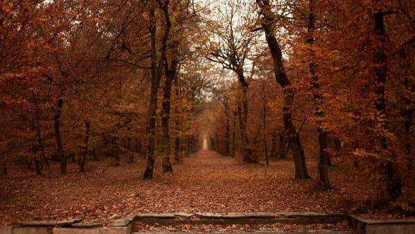 L'autunno a Villa Arconati-FAR: domenica 28 ottobre