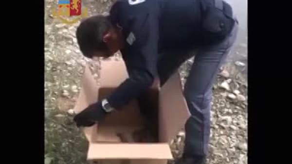 Milano, mamma papera e i suoi piccoli si perdono in centro: salvati dalla polizia. Video