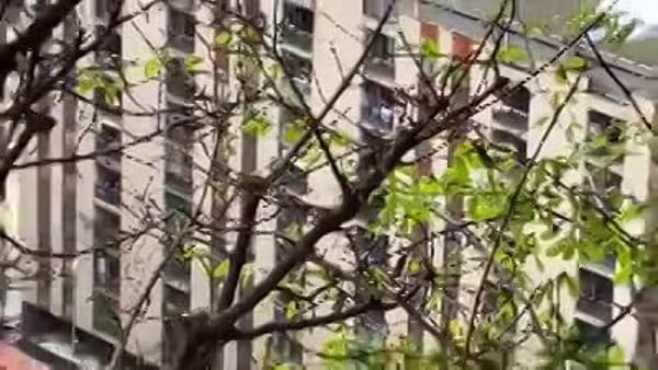Coronavirus, applausi e urla di sostegno anche dal Bosco Verticale a Milano: il video