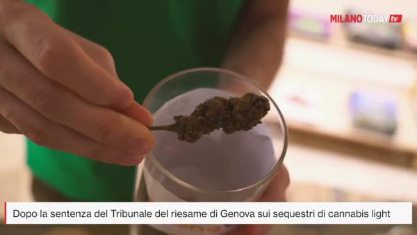 """Cannabis light: """"Dopo la circolare anti CBD di Salvini i clienti tornano allo spaccio di strada"""""""