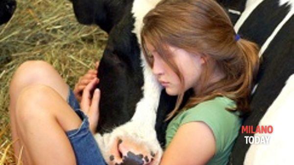 La Rotonda della Besana diventa fattoria dove mungere le mucche