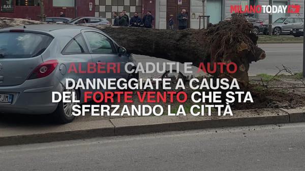 Milano in allerta per il forte vento: in corso Sempione auto danneggiate da un albero sradicato