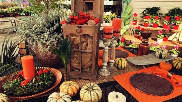 Alla scoperta delle piante d'autunno in un festival a Paderno Dugnano
