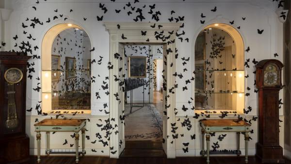 Migliaia di farfalle nere invadono un intero appartamento: ecco la mostra gratuita