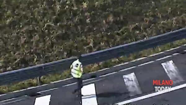 Mamma anatra e i suoi anatroccoli rischiano di morire in autostrada: il video del salvataggio
