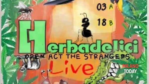 Herbadelici funk open act the strangers