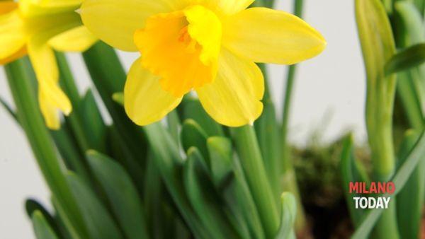 Viridea Rodano: anticipo di primavera con i bulbi