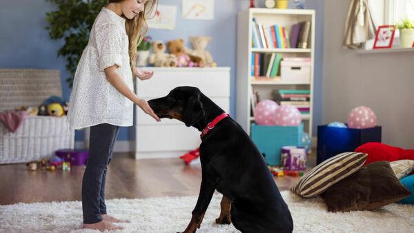 3 idee per intrattenere il tuo cane rimanendo in casa