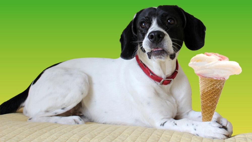 Un gelato pensato per i cani: l'ultima novità di una gelateria dallo spirito green