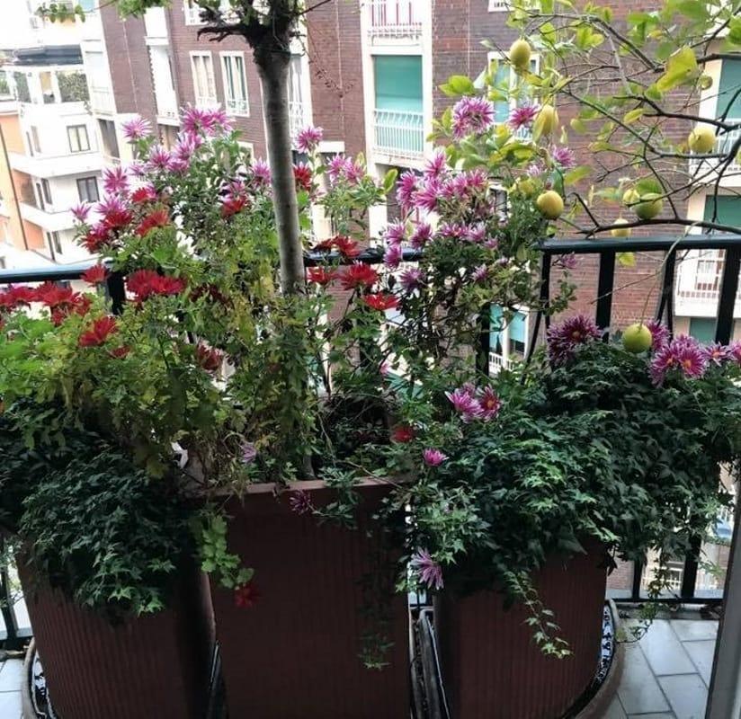 Giardini balconi e terrazze idee per arredarli for Arredare casa costi
