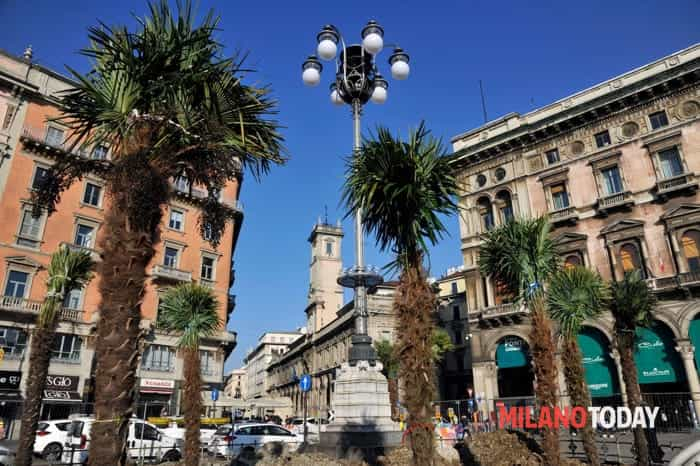 Palme piazza Duomo (1)